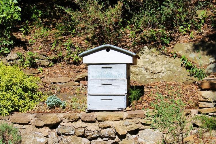 A Walk With A Beekeeper