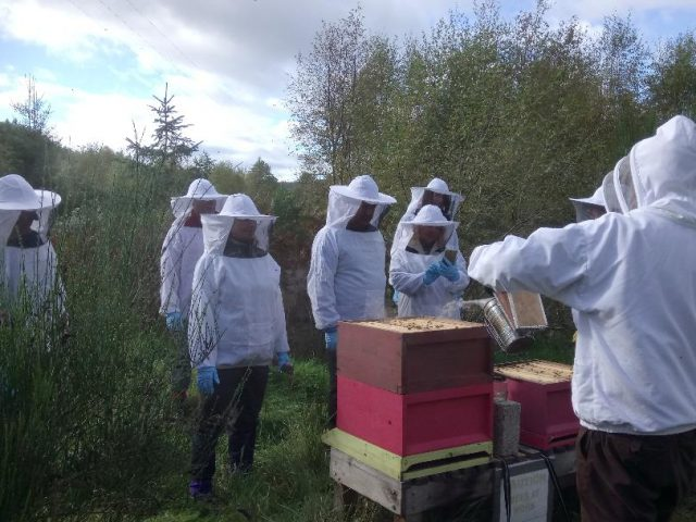 Walk With A Beekeeper And Visit An Apiary