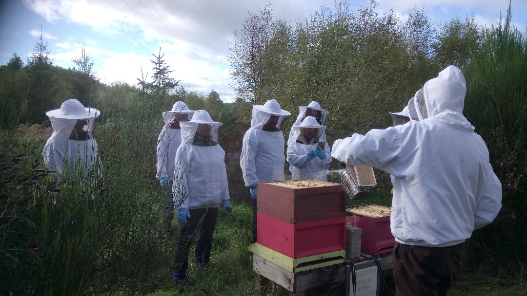 Image 17 – Bees demo 2-Aliens land to join Crieff's Walking Festival